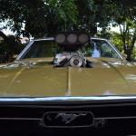 Mustang Blower Nande  016